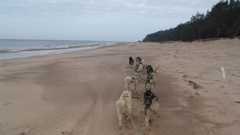 Jízda se psím spřežením neboli mushing se může odehrávat klidně na písku