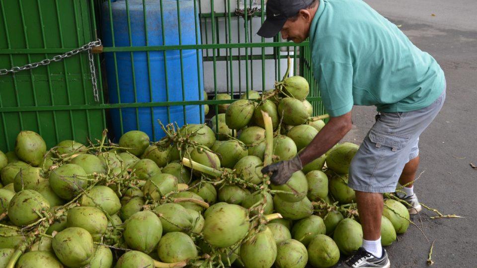 Na hromadě je prý přes 200 kokosů. Ty nejhorší Luciano vrací. Lidé to vědí a chodí k němu i kvůli kvalitě