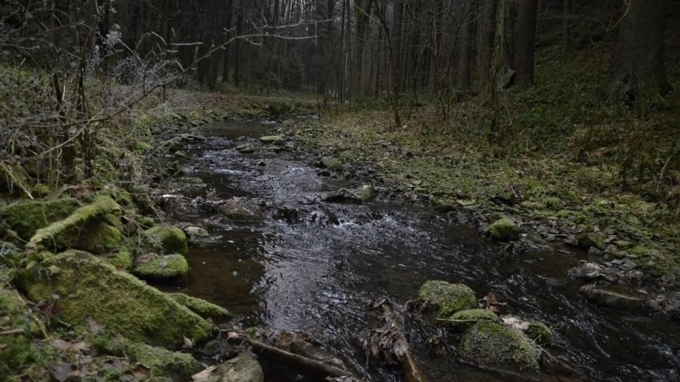 Javornický potok