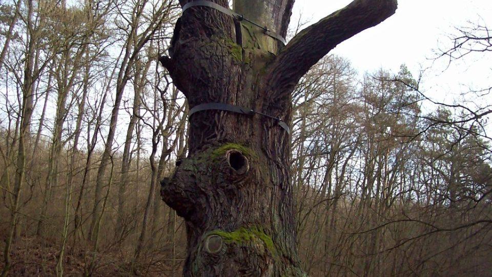 Záchranné obruče na Oldřichově dubu