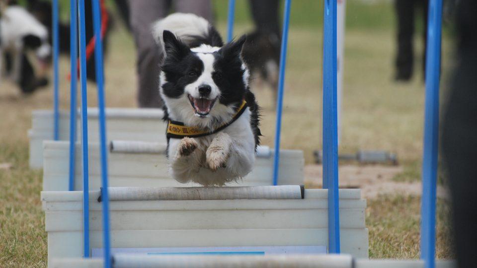 Radost psa z běhu