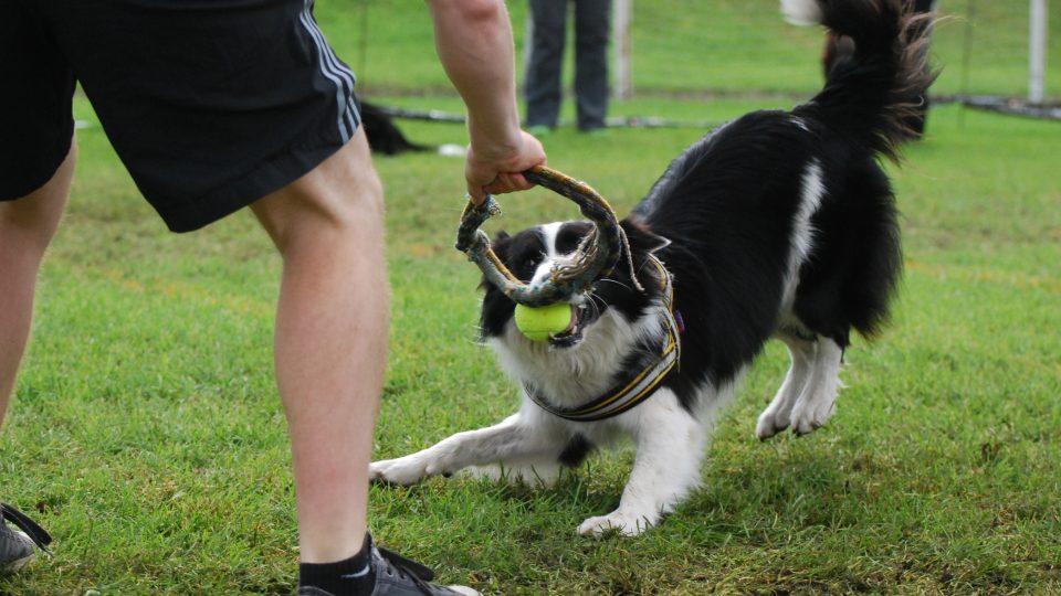 Přetahování mají psi za odměnu