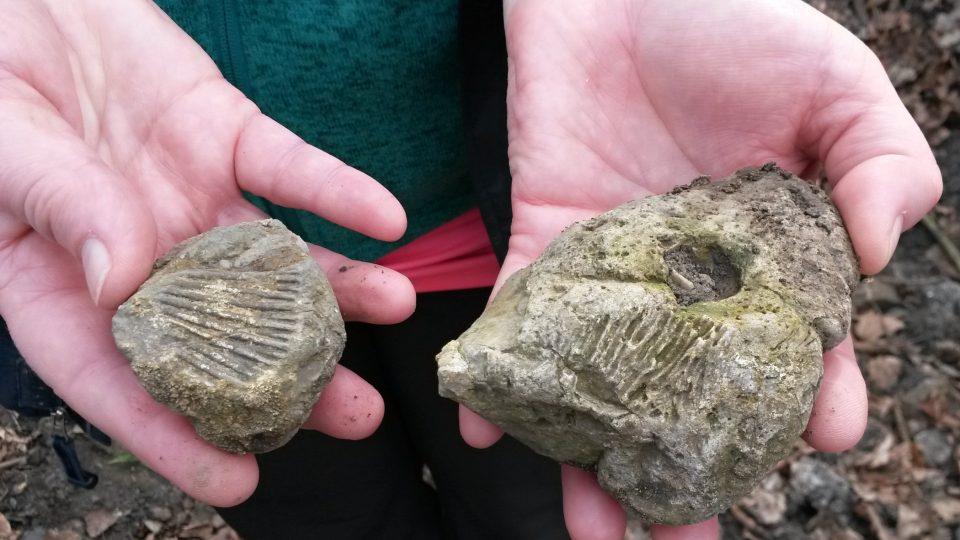 Zkameněliny nalezené v kunínské oboře