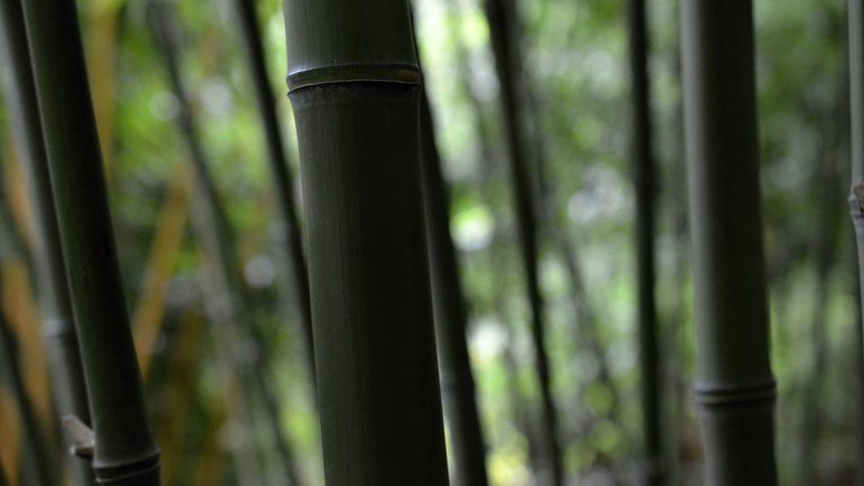 Stébla rostoucí denně 15 cm