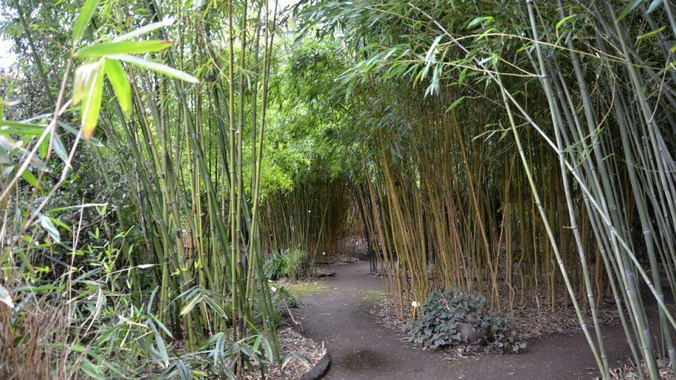 V bambusovém hájku Rosteto v Praze-Troji