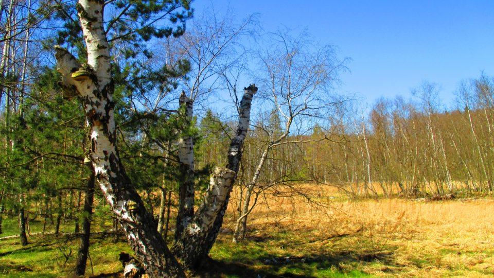V rezervaci vládne příroda