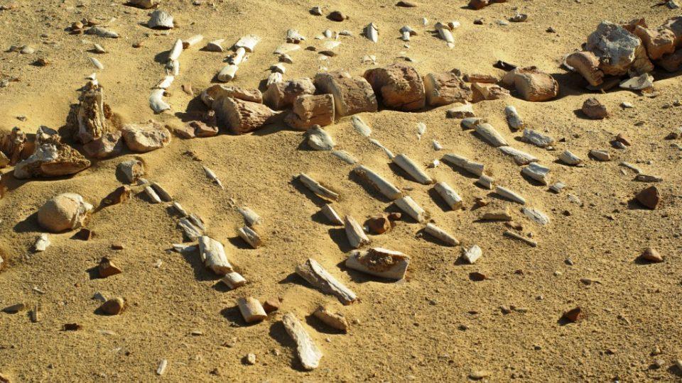 V oblasti se našly tisíce zkamenělých velrybích koster