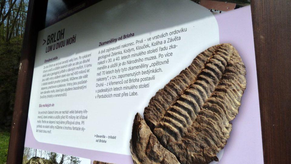 Dvakrát objevení trilobiti