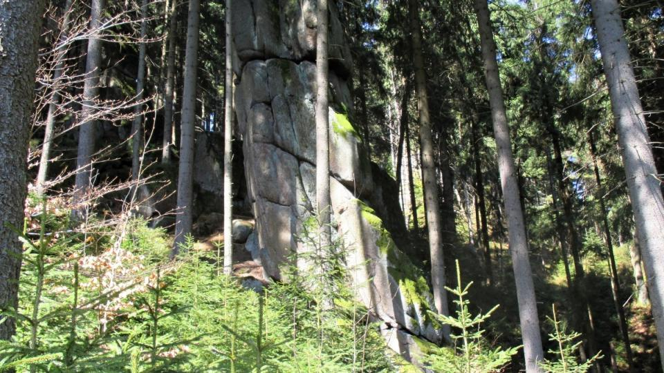 Okolní les pod Šišákem ukrývá další velikány
