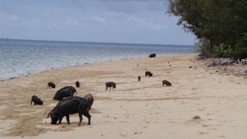 Tonga - ostrov Atata, turistickým ruchem dosud téměř nedotčený