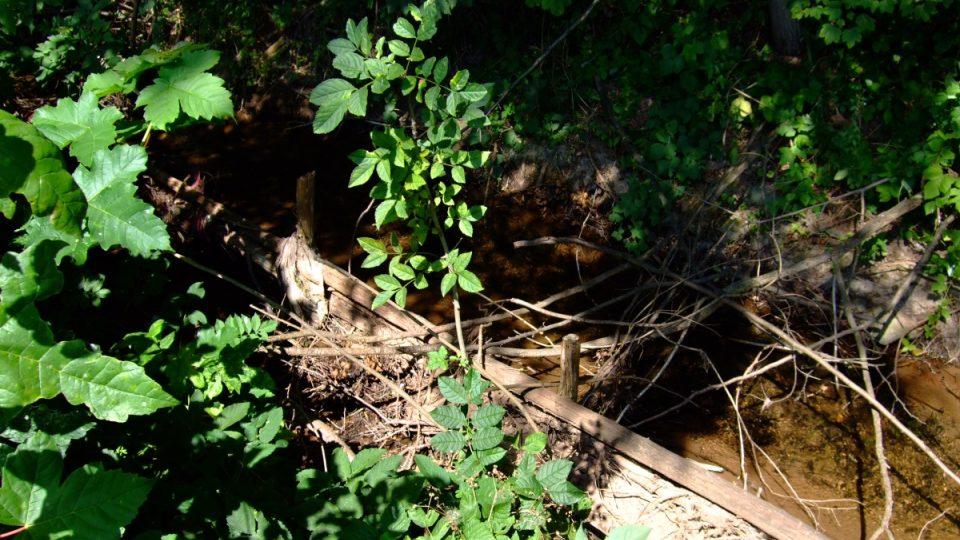 Bakovský rybník před úpravou