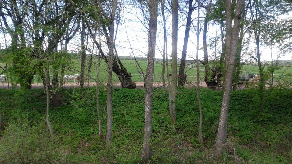 Nalevo od rybníka jsou výběhy koní