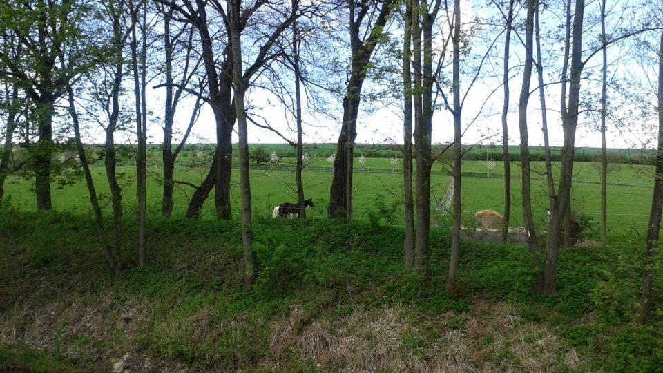 Výběhy koní v těsné blízkosti rybníka Na Rybníčkách
