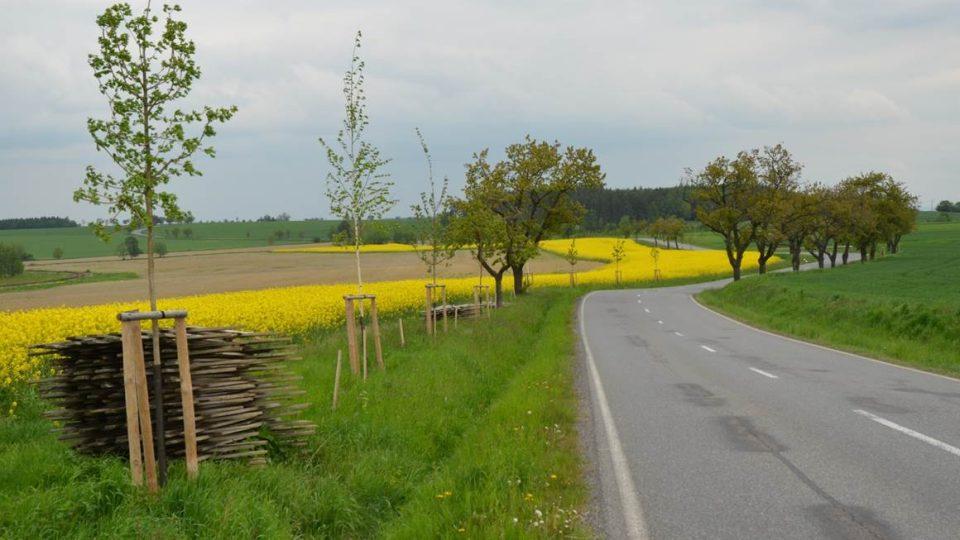 Alej podél silnice Předhradí - Krouna