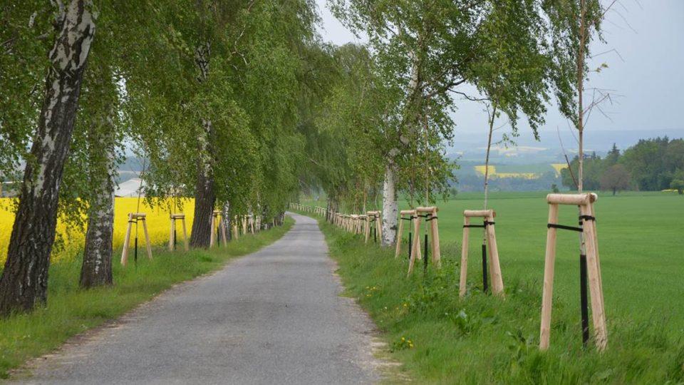 Alej podél silnice Újezdec – Růžový palouček