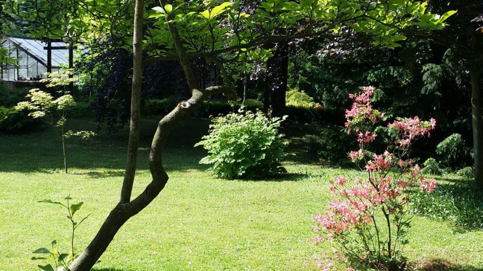 V popředí zelená magnolie