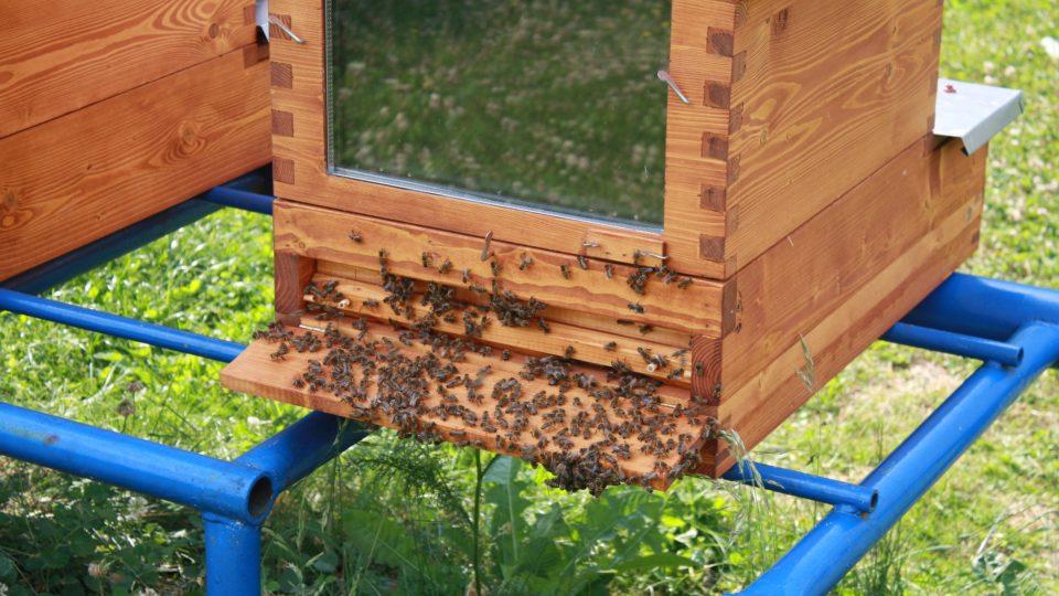Detailní záběr na česno úlu se spokojenými včelami