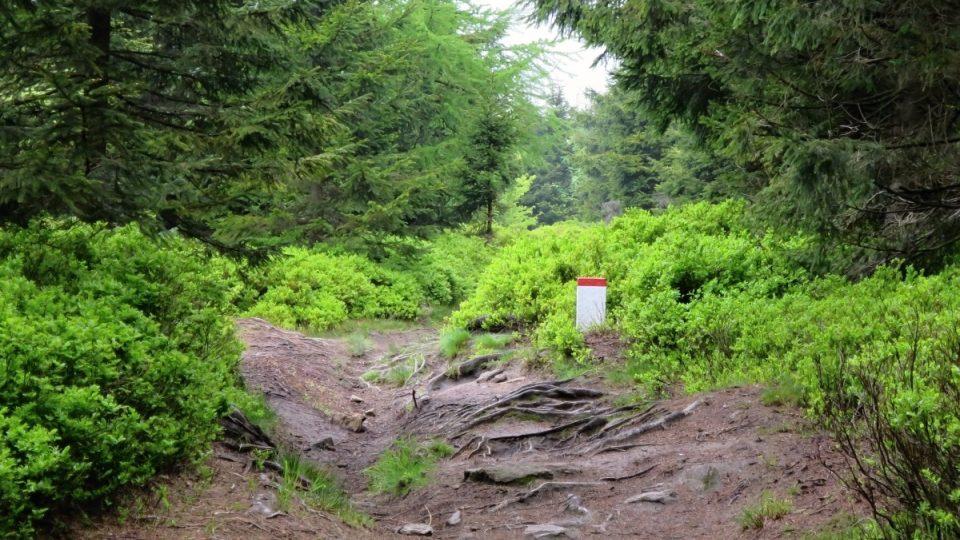 Cesta na Klepáč vede při státní hranici s Polskem
