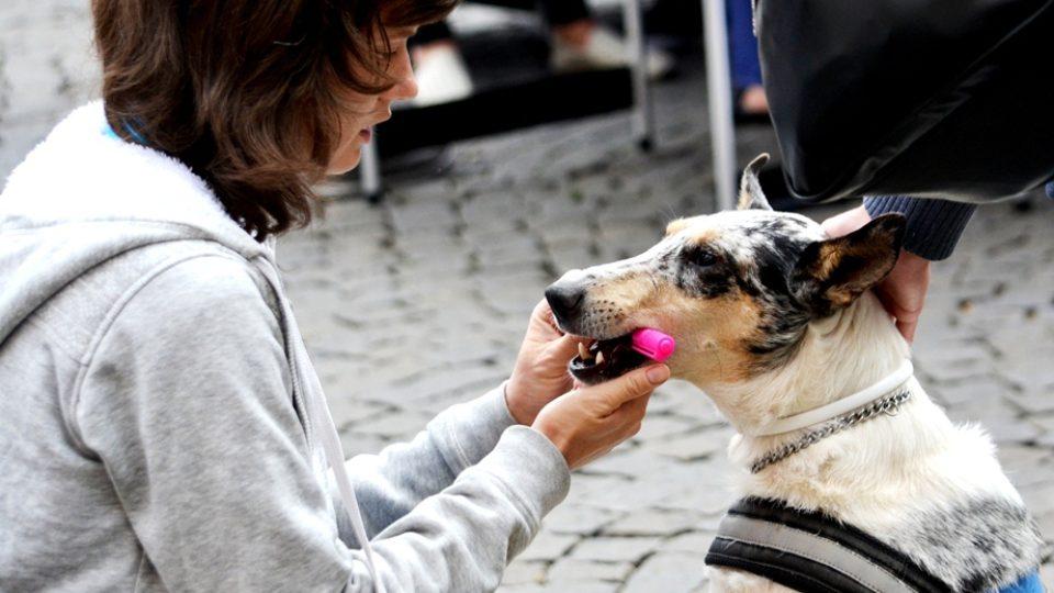 Kavárna POTMĚ -  ukázka výcviku vodicích a asistenčních psů