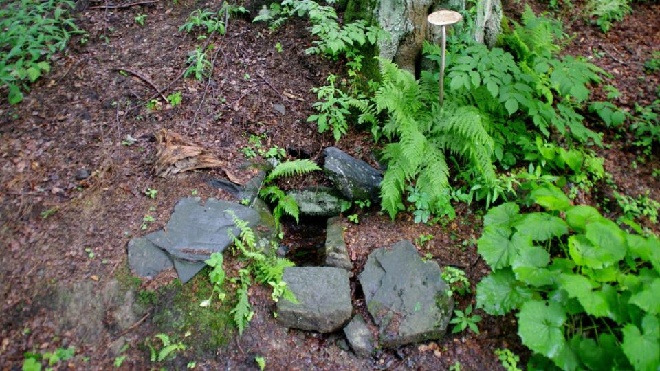 Studánka u lesní ekostezky