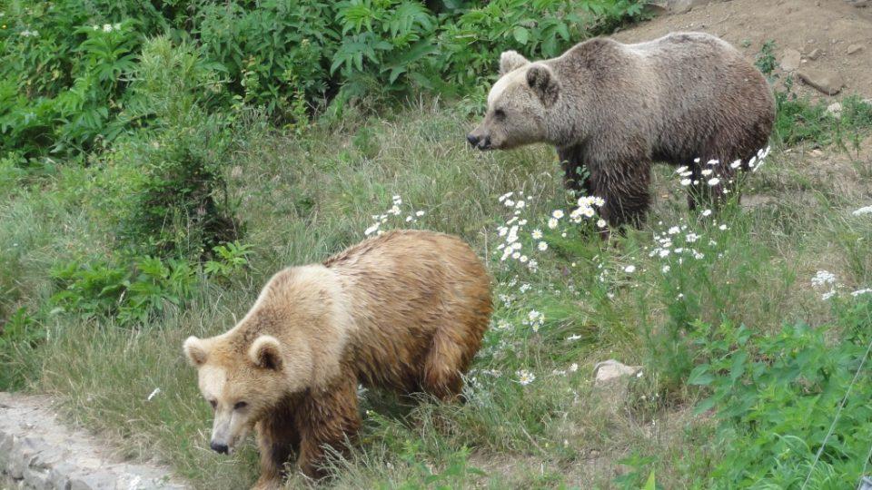 V každém sektoru parku žije několik medvědů, musejí si povahově sednout