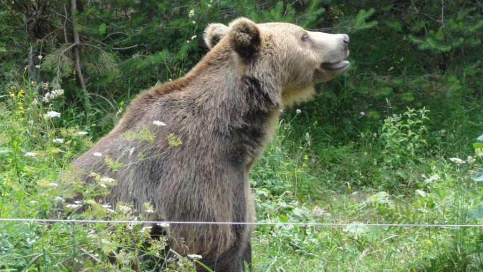 Nejvíce medvědi trpí problémy psychického rázu