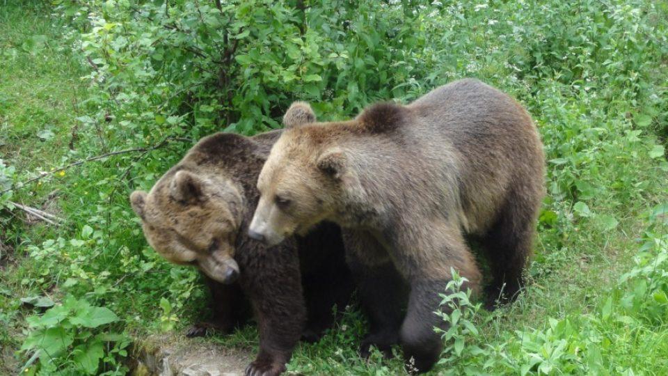 V parku si medvědi užívají důchod, mnohým je už kolem 30 let
