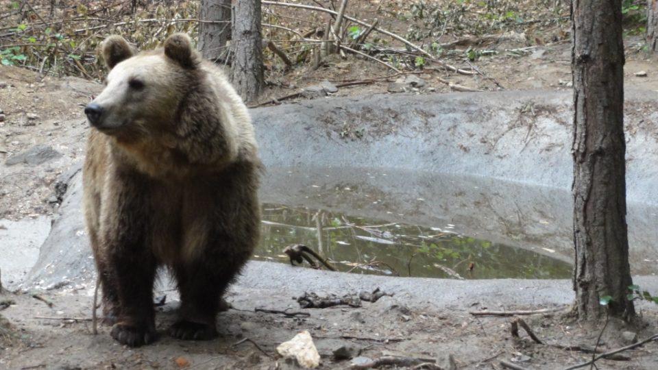 Zvířata si i po celém životě v zajetí na přírodu dobře zvykají