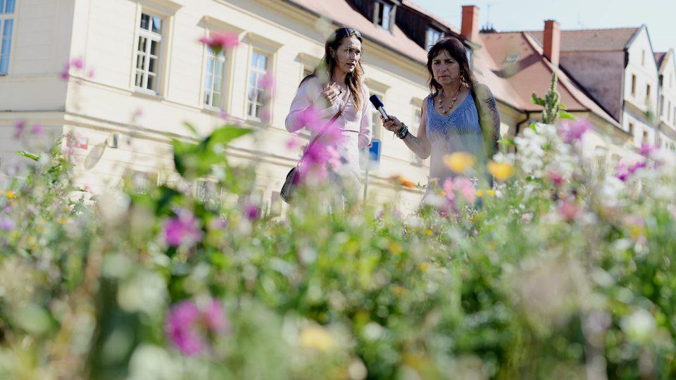 Zahradnice Lenka Marková ukazuje jednotlivé druhy lučního kvítí Drahomíře Bačkorové