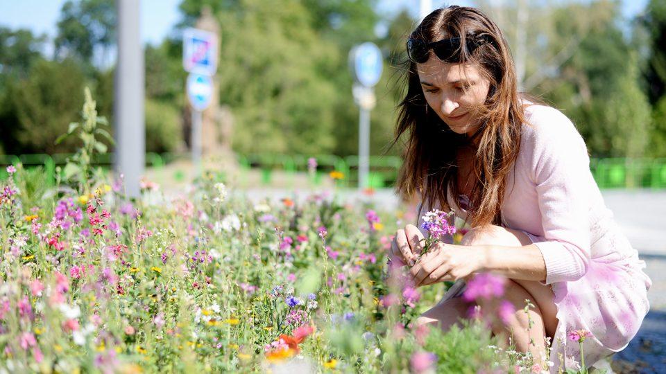 Zahradnice Lenka Marková vybírá květy z luční směsi s názvem Lednická radost
