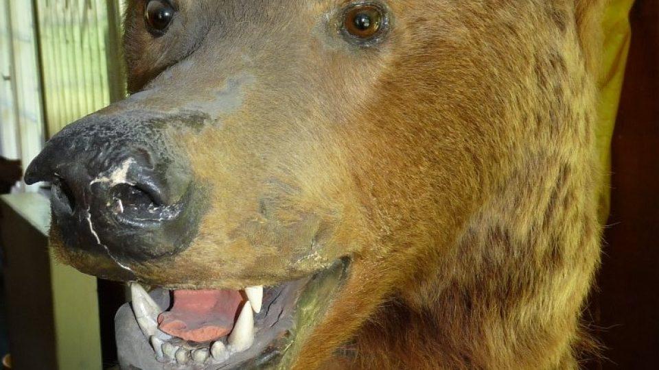 K chatě už neodmyslitelně patří medvěd