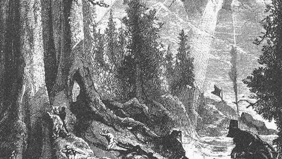 Původní obálka k románu Julese Vernea Škola robinsonů (1881)