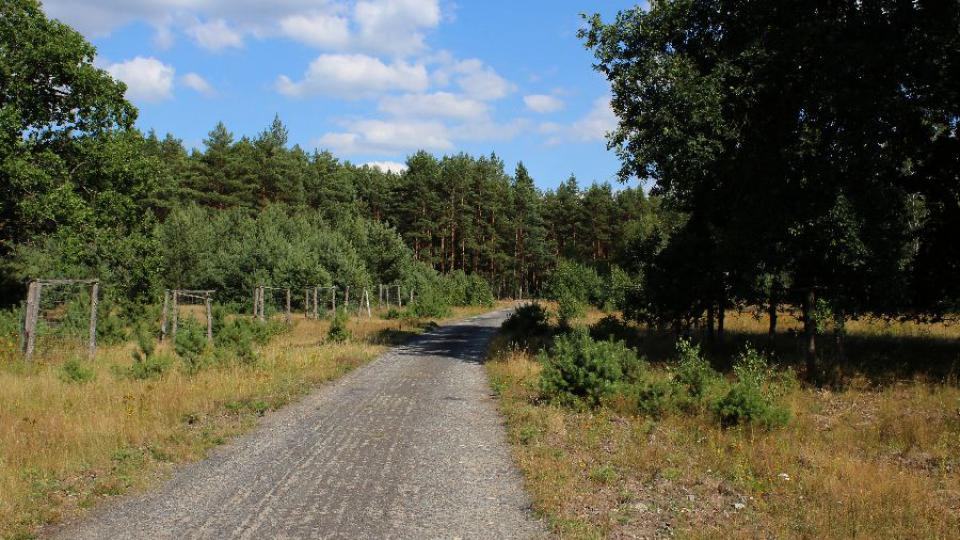 Cesta na Strážov