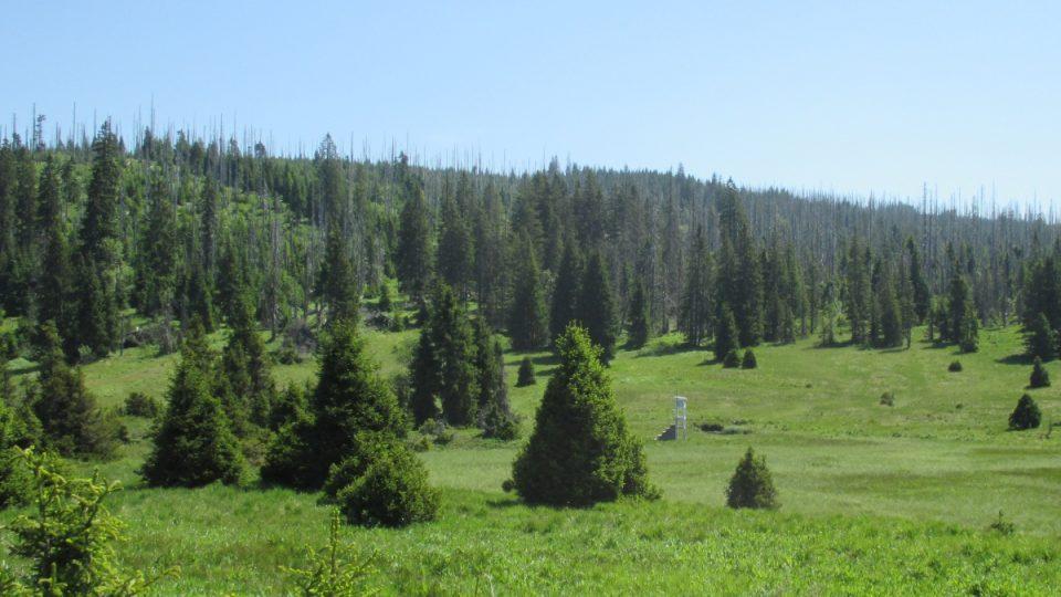 Luzenské údolí v NP Šumava