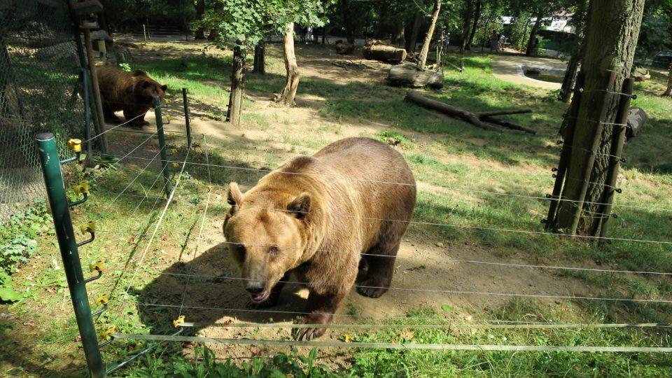 Medvědí pozdrav z Berouna