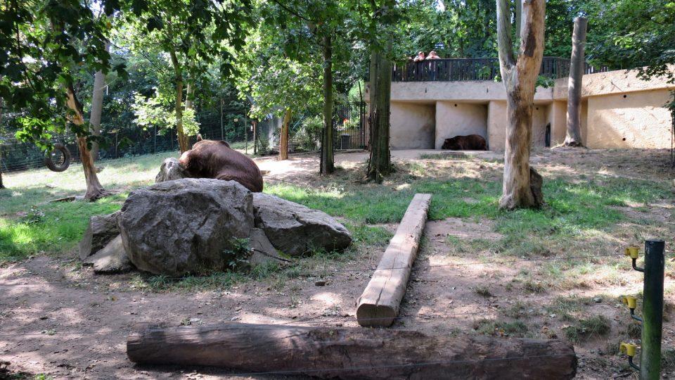 Výběh medvědů