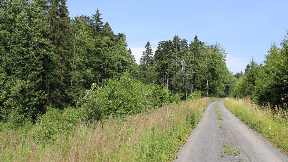 Lesy v okolí Šternberka
