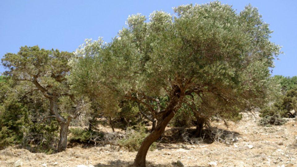 Středomořská krajina