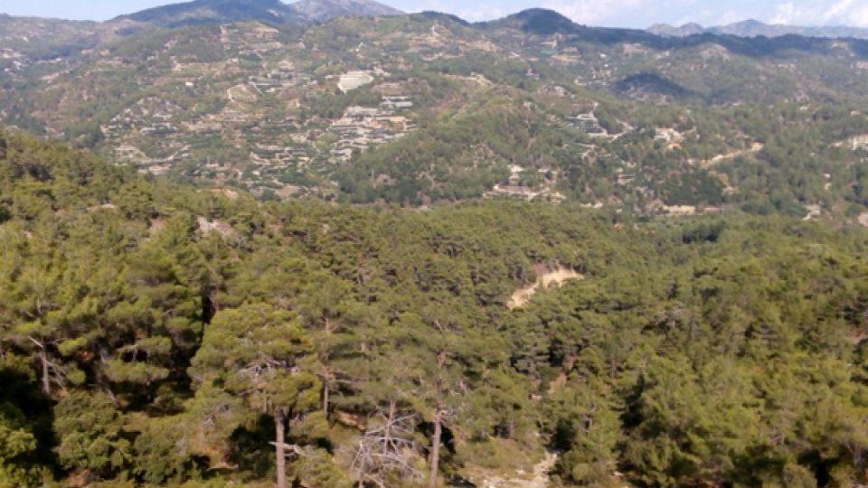 Pohoří Troodos pokrývají smíšené lesy pínií a cedrů