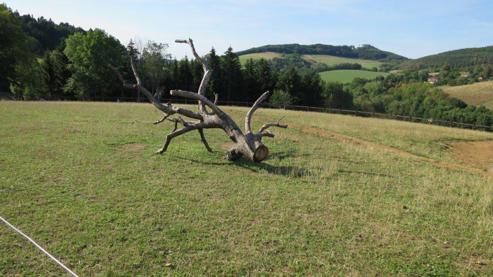 Rozloha 25 ha nabízí velmi prostorné výběhy a pastviny