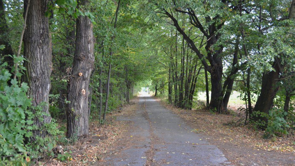 Alej stromů u Kališova jezera