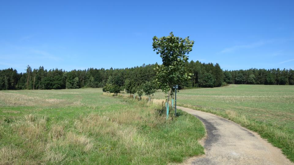 Na mnoha místech jsou nově vysázené stromy