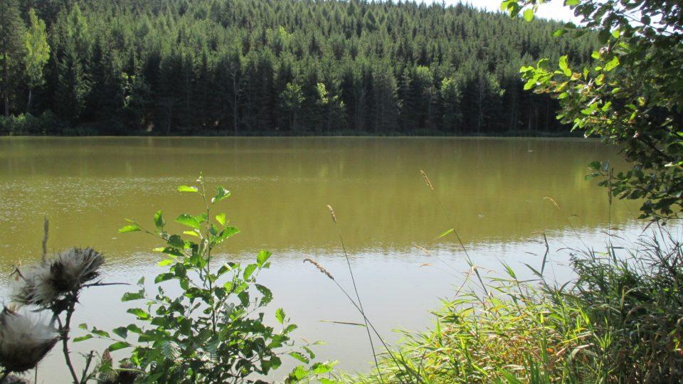 Strakovský rybník je obklopený lesy