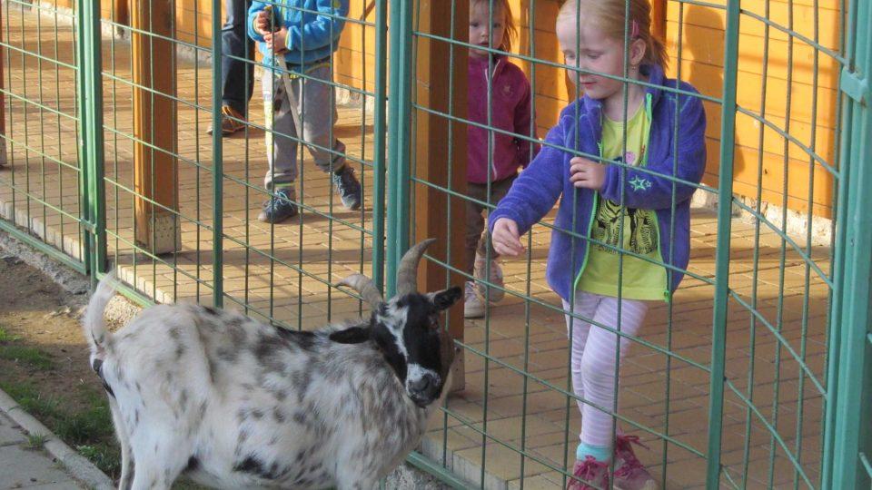 Děti zde najdou zvířata i z jiných kontinentů