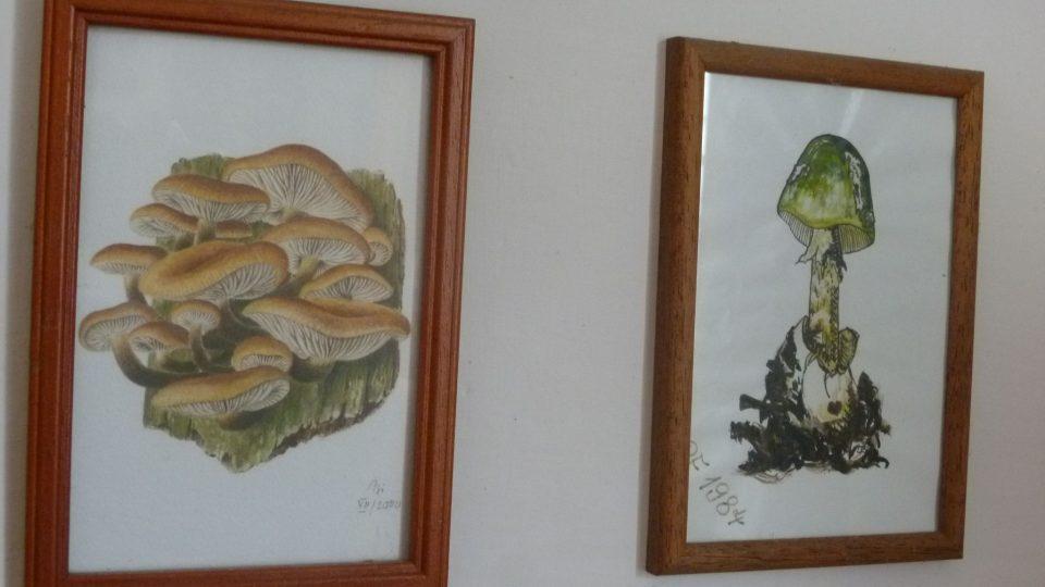 Pan Sedláček je opravdu vášnivý mykolog. Fotky a obrazy hub má rozvěšené po celém bytě