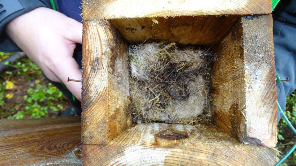 Vědci hledají v hnízdech sýkorek losí chlupy