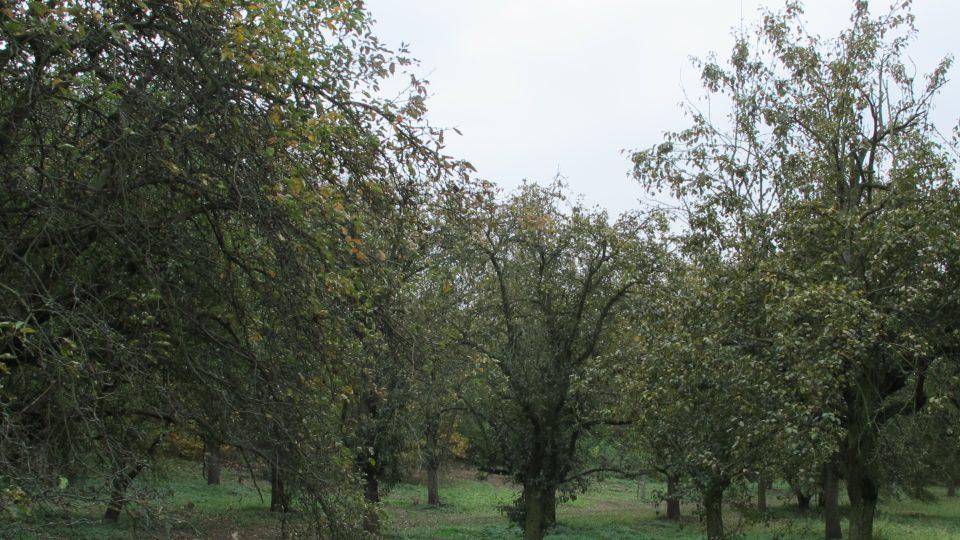Ovocný sad Praha Klíčov