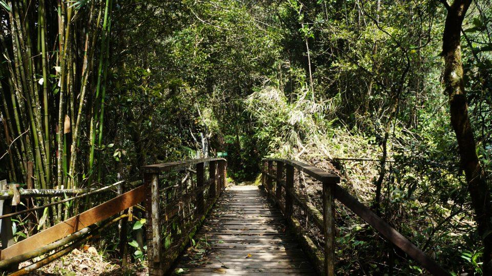 K pozorování ptáků je Kinabalu ideální. Je jich tu skoro 700 druhů a taky je tu prý i pro relativně nezkušené cestovatele bezpečno