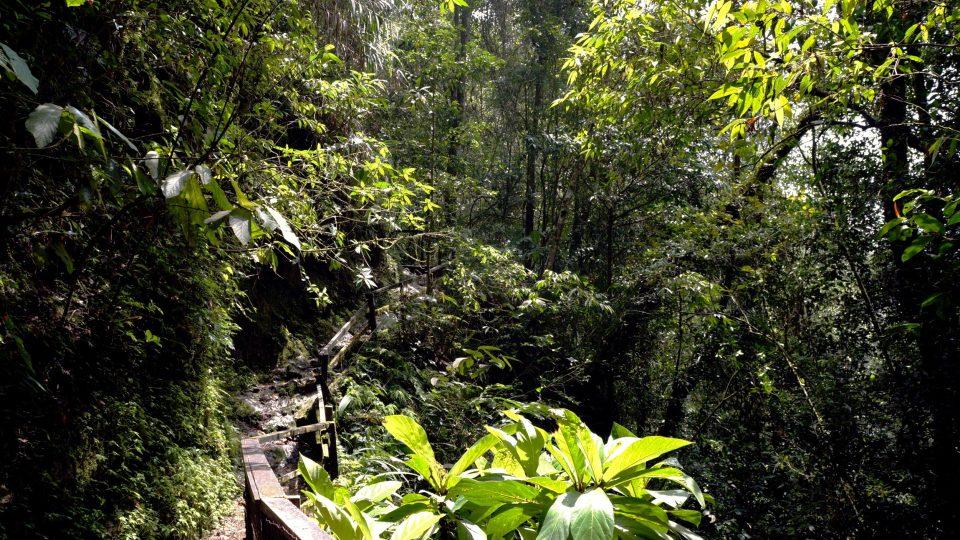 Na svazích nejvyšší hory jihovýchodní Asie rostou orchideje, masožravky i ty nejmohutnější stromy