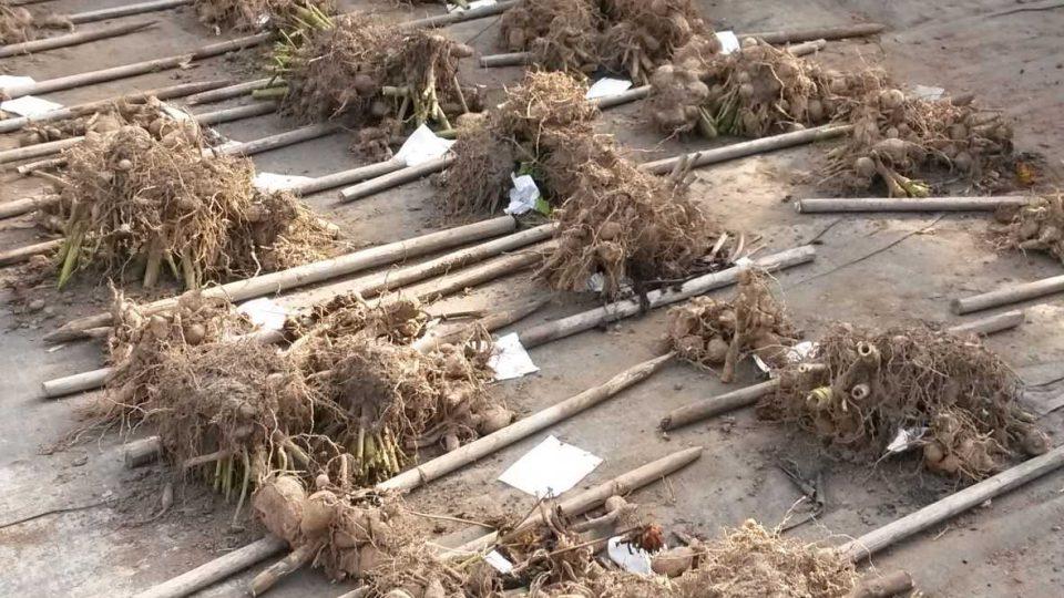V kunínském zahradnictví